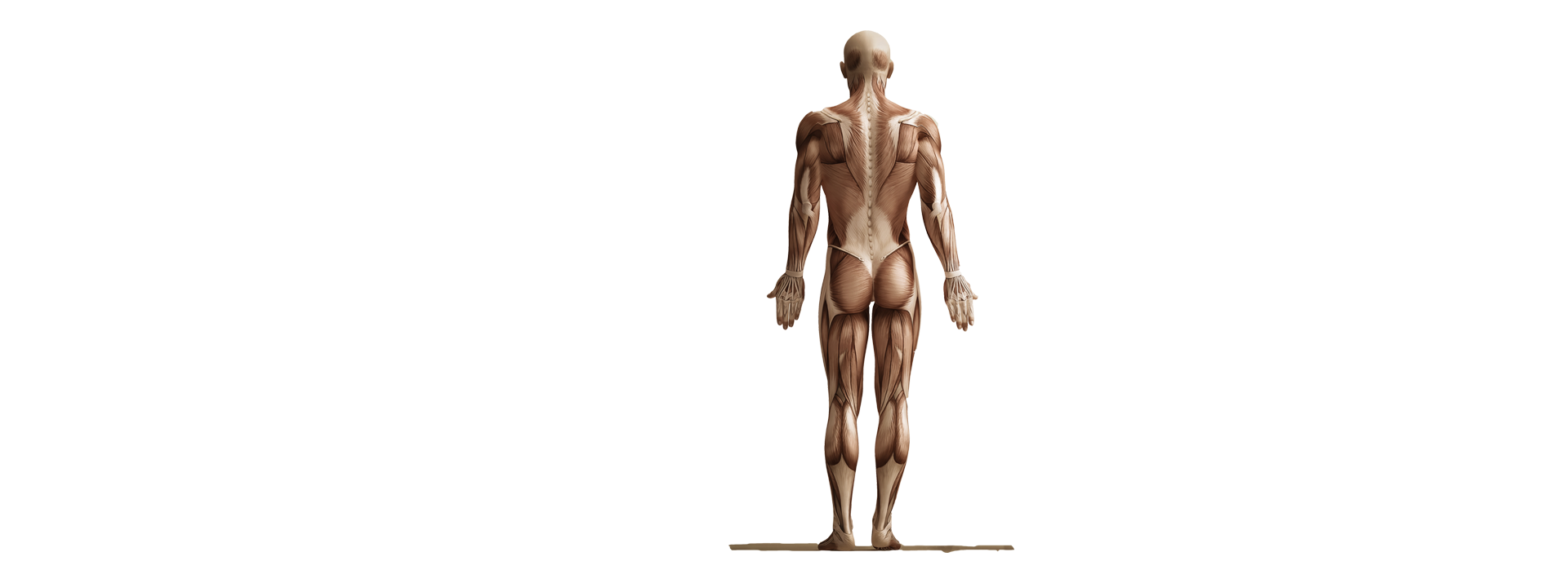 Chiropractor in Sterling Heights